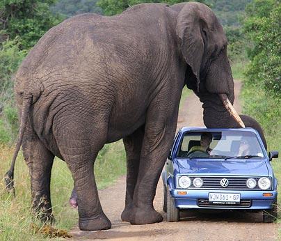 elephant-car