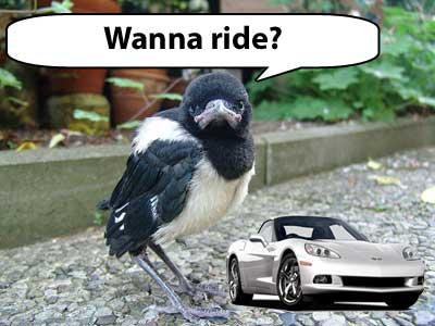 wanna-ride